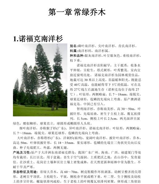 景观植物 南方常见植物-常绿乔木(共39页)