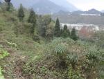 [四川]地震极重灾县安置点地质灾害危险性评估报告