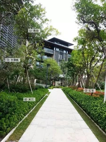 最详细图解:深圳湾三大豪宅景观植物配置!_10