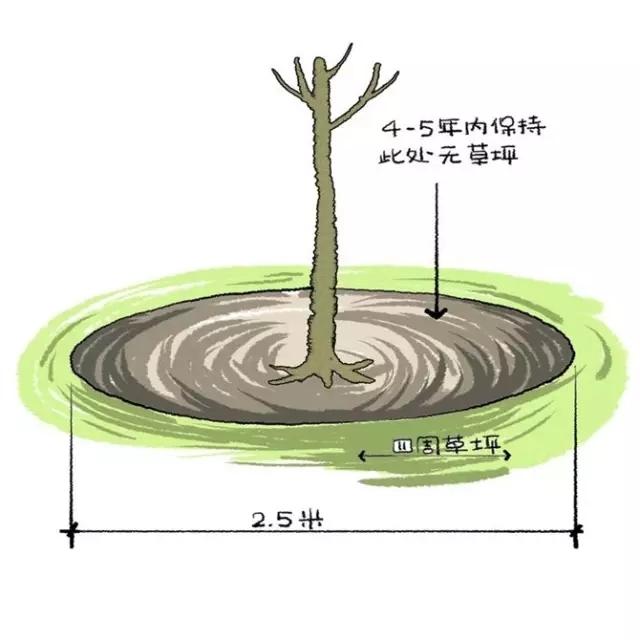 种植秘诀·图解园林景观之乔木种植技术-640.webp (10).jpg