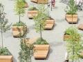 常见园林绿化植物名称大全及图片|园林植物图片|园林绿化设计