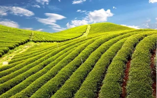 农业景观的意义_6