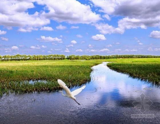 [山东]国家湿地公园建设工程设计招标文件