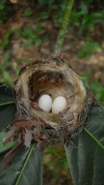 """动物界的""""建筑大师""""筑巢能力叹为观止!"""