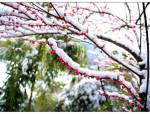 7款冬天开花的绿植,在寒冬盛开的它们个个都美翻了!