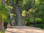 蓝洞区域公园:保护敏感景观