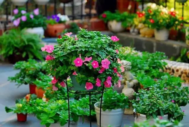 植物的相生相克