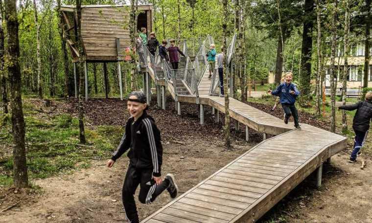 丹麦校园里的神奇树林景观-9