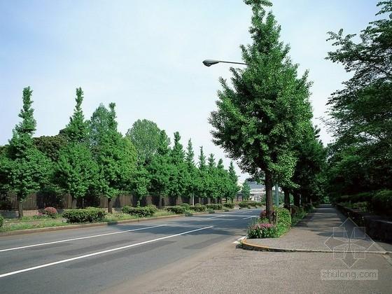 [重庆]城市标准分区道路工程施工图设计(含水电设计)