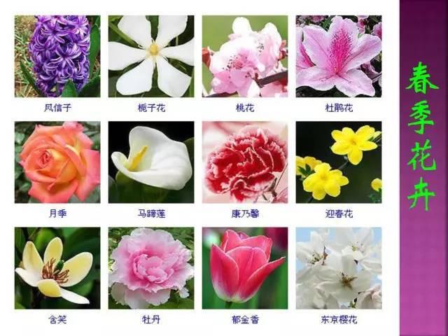 史上最全景观花卉图例,憋在问这是啥了?