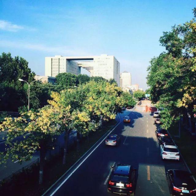 植物配置]浅谈城市道路绿地植物景观营造