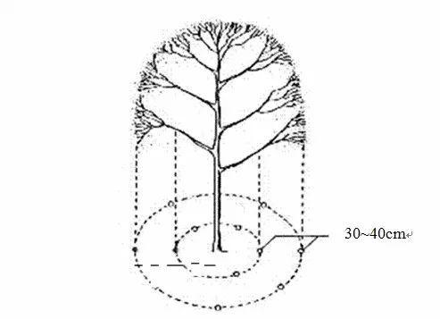 干货|绿化植物养护的技术规范