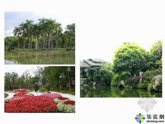 [讲义]居住区中常见植物景观配置