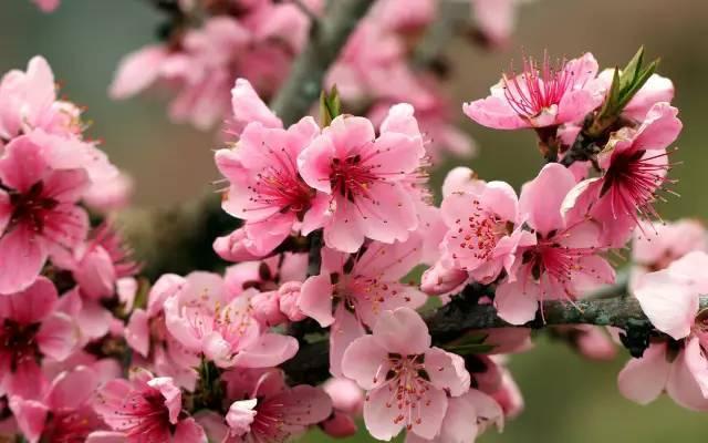 全国七大片区,常用开花植物集锦