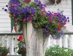 用树桩装饰花园,这样的做法简直美呆了!