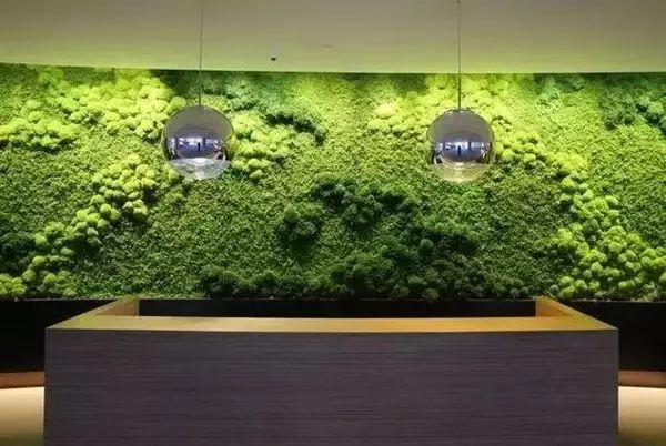 植物也可以这样上墙!