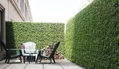 实用 景观植物设计方法(图文解析,值得收藏)_22