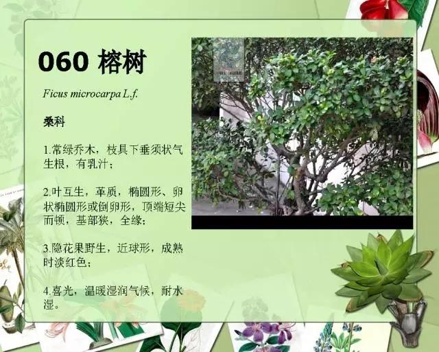 100种常见园林植物图鉴-20160523_183224_064.jpg