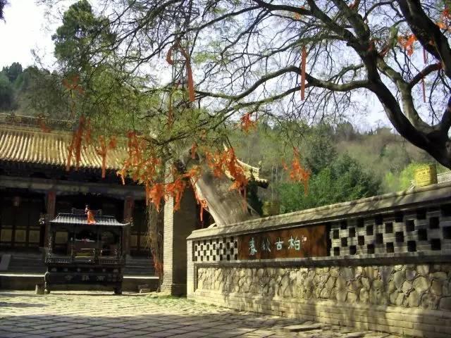 中国公认的9种顶级古树名木
