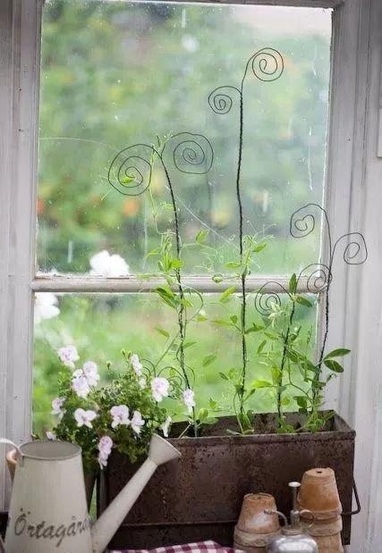 世界那么大,我却只想要个小院花开满园,自在从容……_10