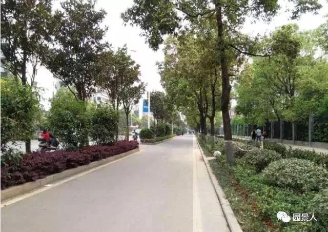 城市干道植物配置,实用干货不得不看!_10