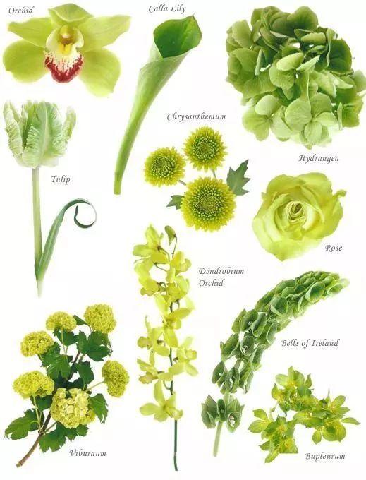 花园植物配色魔法学,你get到了吗?_10