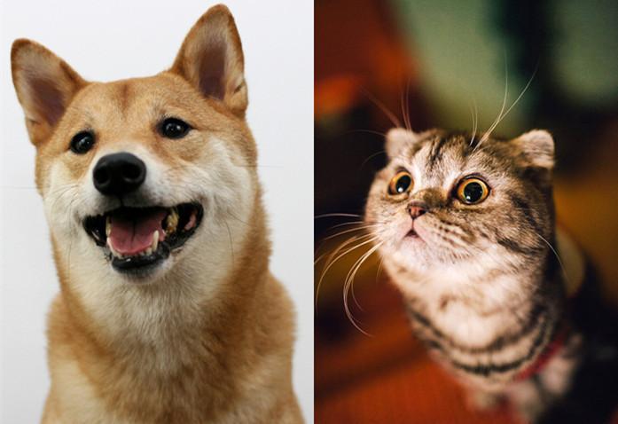 室内设计=犬系创意+猫系执行_1