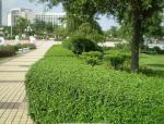 上海市园林绿化建设工程施工合同示范文本