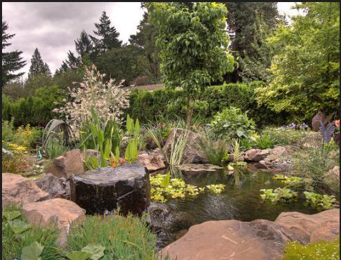 你所不知道的雨水花园的植物选择