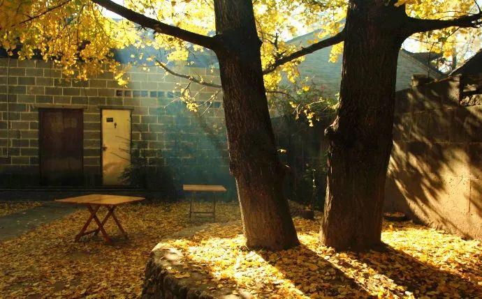 这才是中国人的院子,秋天美到骨子里_33