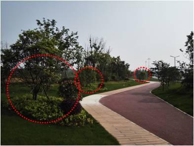 景观植物配置葵花宝典_91