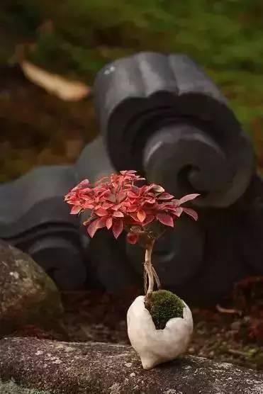 绿植这样摆,你家比园林还要美!_15