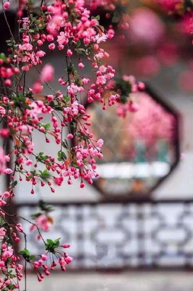 花窗之美,穿越千年而来_1