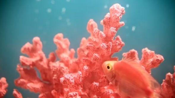 色彩界老大发布2019年流行色:活力珊瑚色_5