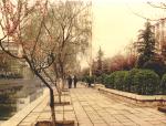 城市道路绿地规划设计(ppt,89页)