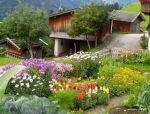 愿我有个的院子,种菜。