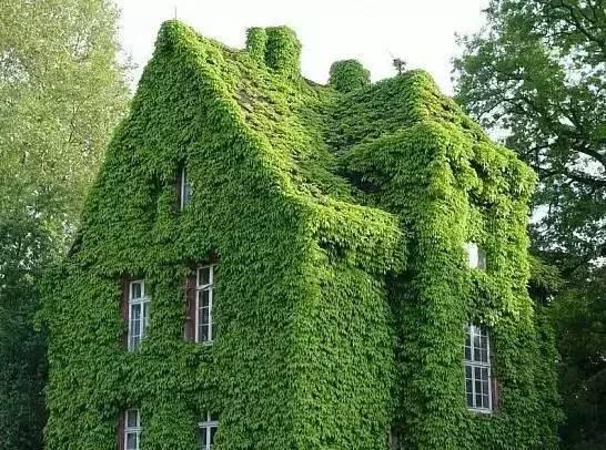 植物造景|垂直绿化全面解析