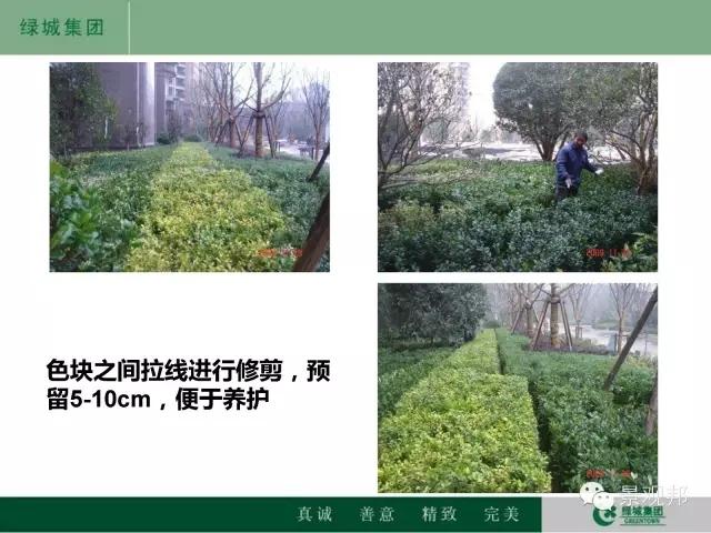干货|绿城精致景观营造工艺工法篇倾情呈现-20160518_104945_117.jpg