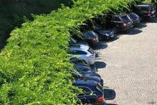 停车场也玩生态_2