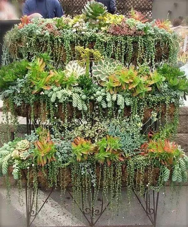 植物界萌宠迷你精致,萌态万千