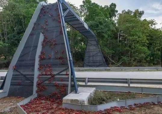 这些专为动物设计的桥梁和通道,拯救了无数生命!!
