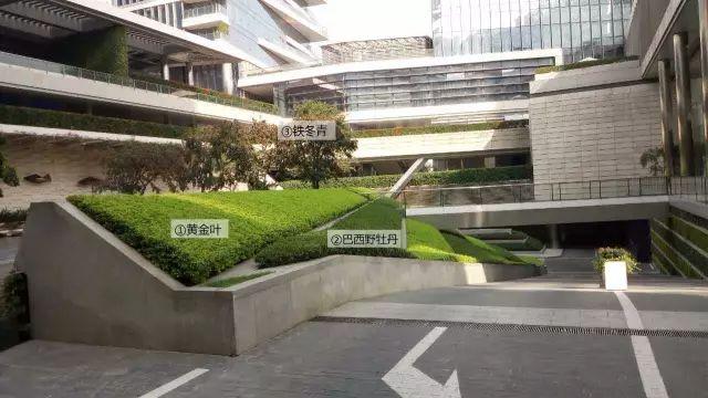 最详细图解:深圳湾三大豪宅景观植物配置!_16