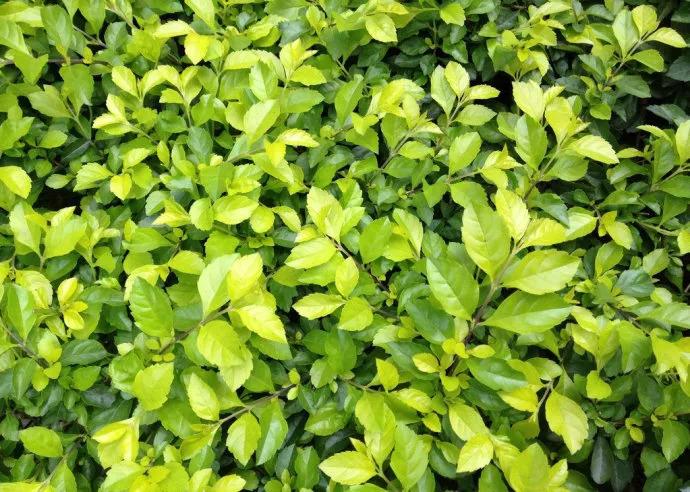 干货 景观地被植物的选择方式_4