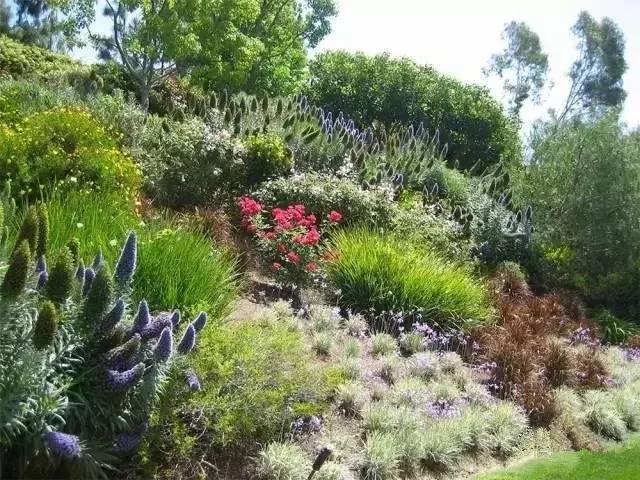 处理坡地景观高逼格方法,种草!种草!!_46