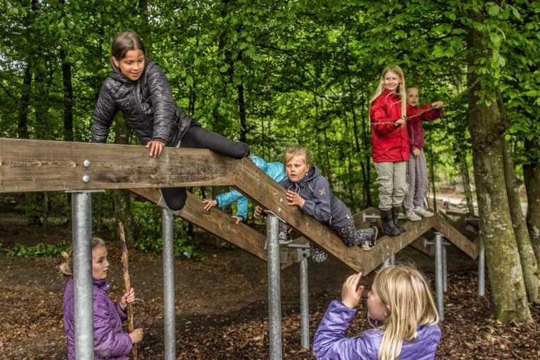 丹麦校园里的神奇树林景观-5
