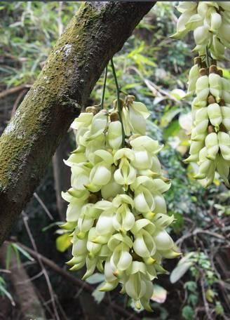 十八种藤本植物大集合~-020.jpg