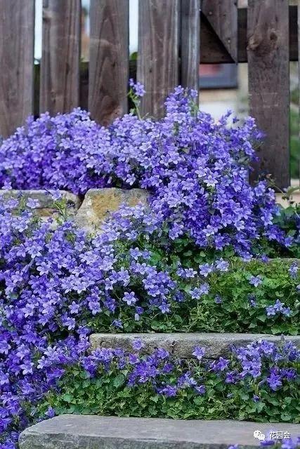 花草与石板的关系•花园小径_25