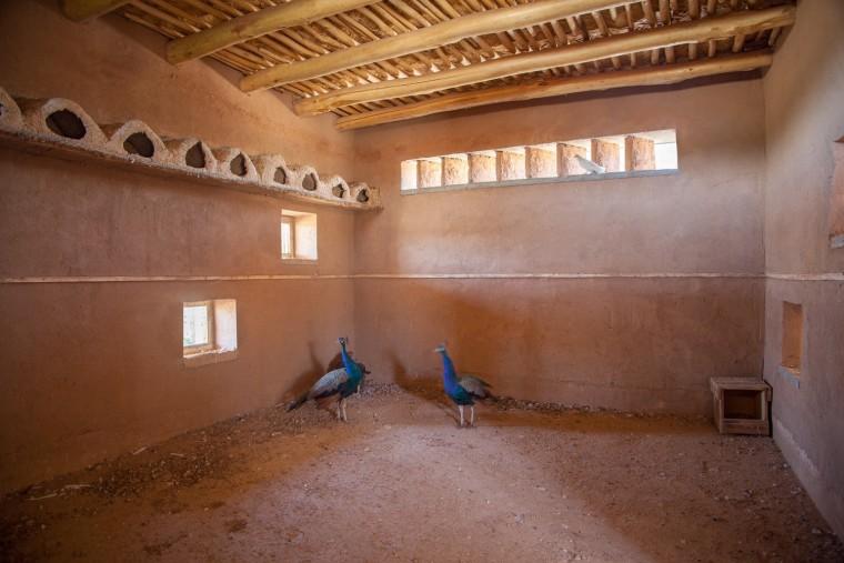伊拉克动物辅助疗养中心-9
