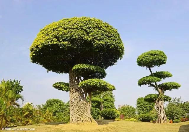 灵气之源·中式庭院主景树一览_29