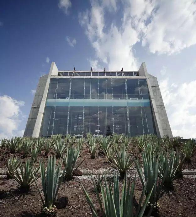 墨西哥充满活力的建筑场景_12